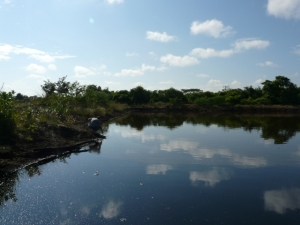 Pond, sky, bushes